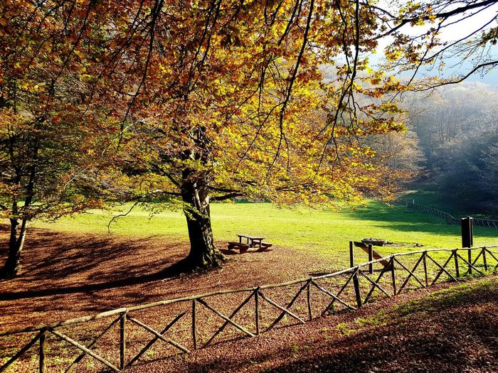 i colori dell'autunno a monte Cucco Tree Water Sky Landscape Chainlink Fence Razor Wire Love Lock Wire Mesh Grid Electrical Grid Link Hexagon Padlock Crisscross Security Plough Barbed Wire Chainlink Fence Agricultural Field Growing Farmland Sunset Tranquil Scene First Eyeem Photo This Is Strength EyeEmNewHere