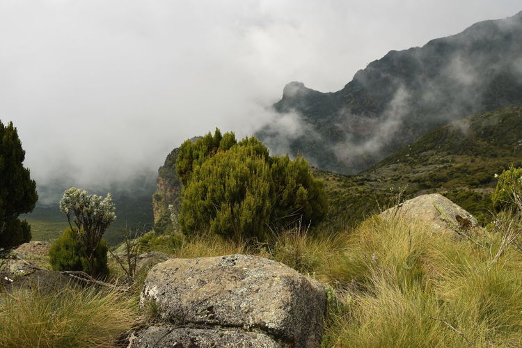 The foggy landscapes in the aberdare ranges on the flanks of mount kenya