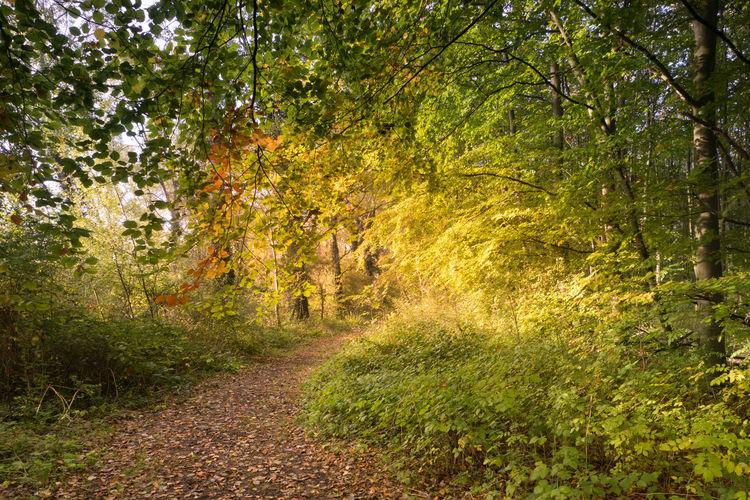 Autumn at Knokkertqweg, Nieuwvliet Tree Forest Autumn Tranquility WoodLand Footpath Sony A77ii Zeeuws Vlaanderen Zeeland  The Netherlands Tranquil Scene