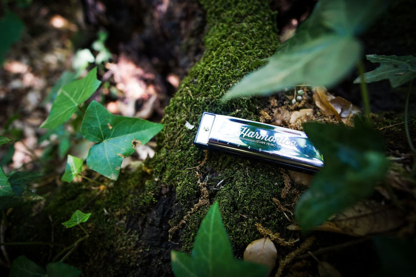Harmonica Blues Blues And Greens Blues Music Country Road Forest Life Forest Photography Forest Trees Harmonica Harmonica Blues Harmonica Forest Harmonica Life Harmonica Morning Harmonica Wood Landscape Music Musical Equipment Musical Instrument Romantic Suggestion Tree