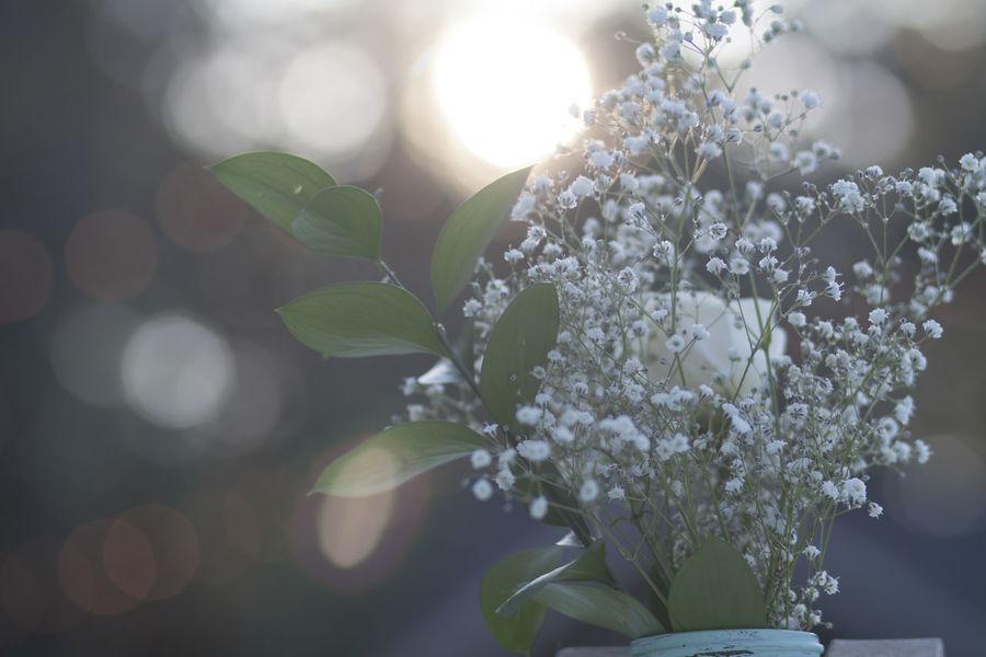 Flowers Vase Outside Wedding Romance Twinkling Lights