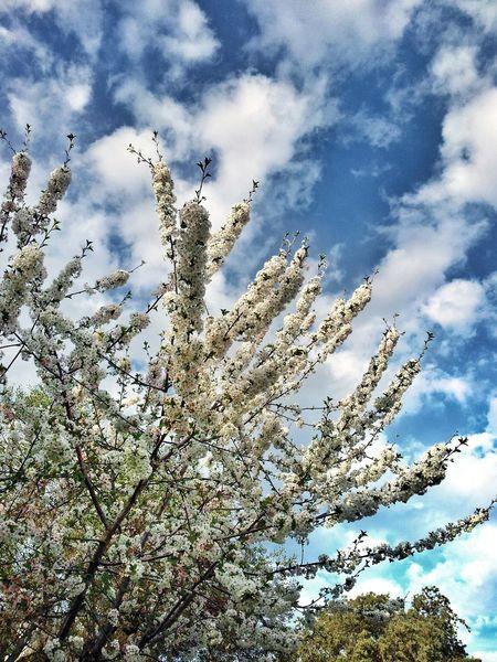 Nieve de Primavera Destinorural Aracena Movilgrafias SierradeAracena