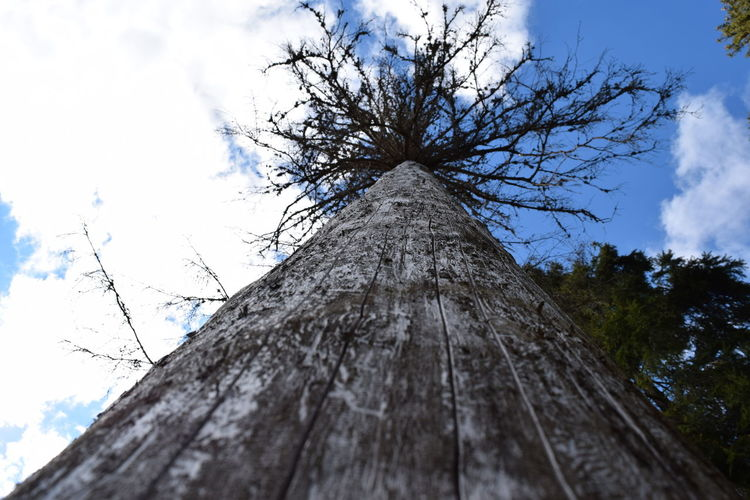Low Angle View Outdoors Tree Tree Tree And Sky Tree Trunk Tree Trunk Wood