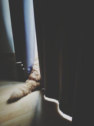 Hiding Hidden