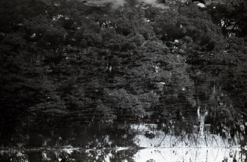 Full frame shot of trees by lake in forest