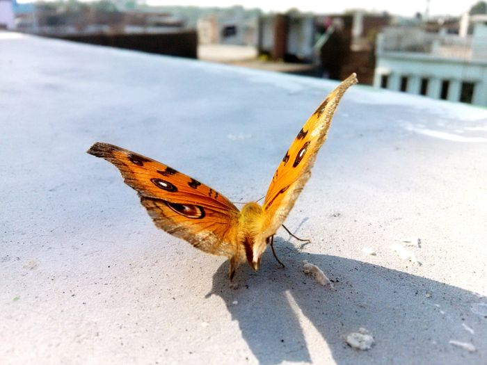 Close-up of moth on retaining wall