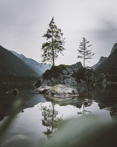 Island with a tree at Lake Hintersee, Bayern, Germany. Tree Water Tranquility Mountain Beauty In Nature Plant Lake Sky Tranquil Scene Scenics - Nature Reflection Nature Non-urban Scene No People Rock Day Solid Forest Rock - Object Outdoors My Best Photo