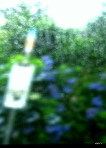 雨の一日。後悔しないように… https://youtu.be/QE3WvwpJ2tI 全ボケ しずくふぇち しずく ボケ味ふぇち 妄想ふぇち Love_blue 紫陽花2015Photo Bus Stop Rainy Day Kagoshima