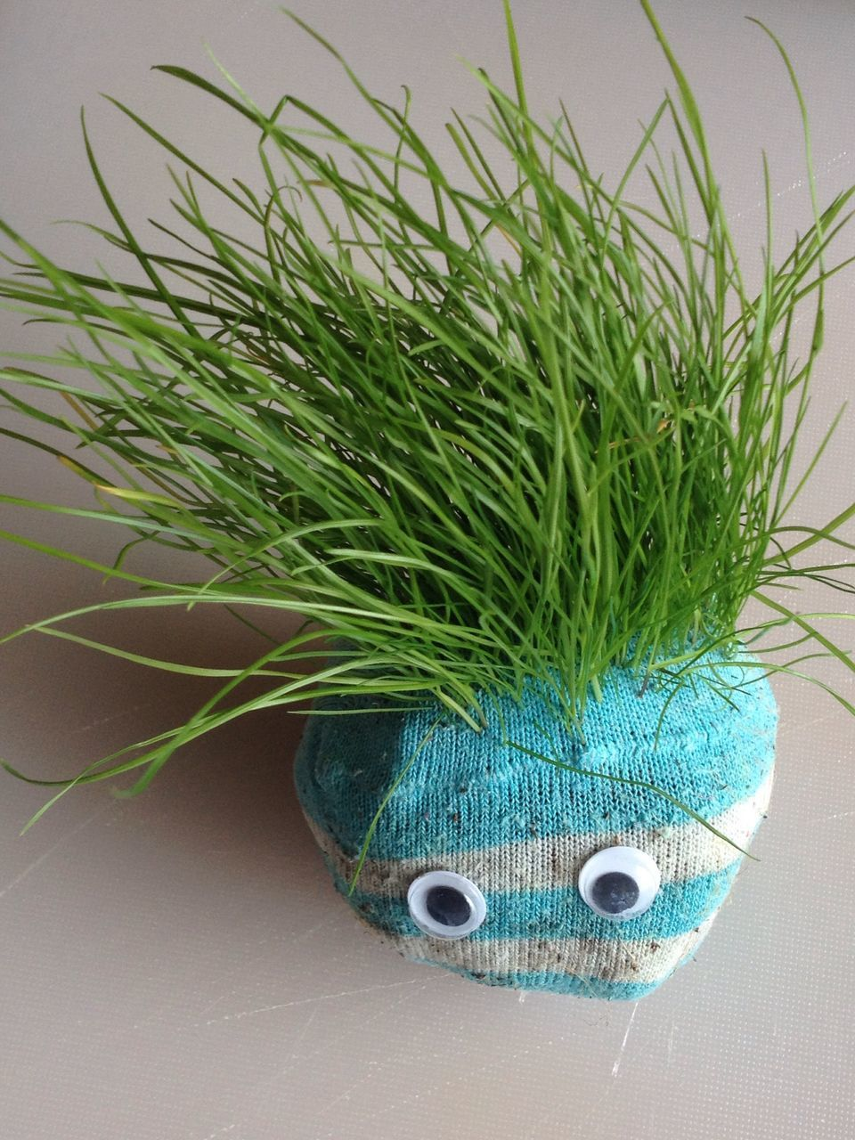 Plant In Knitted Wool