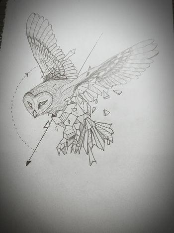 Owl Art Owl Illustration Creativity Hedwig Bollhagen