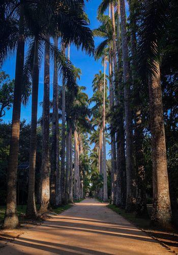 Siga o seu caminho e conquiste sua felicidade. Way Jardimbotanicorj Riodejaneiro Jardimbotanico Cristoredentor Tree Plant Nature Beauty In Nature Tree Trunk Tranquility The Way Forward Direction Treelined