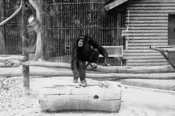 Animal Themes Mammal One Animal Domestic Animals Animals In Captivity Animals In The Wild Outdoors No People Day Cage Animal Wildlife Monkey Pets Nature