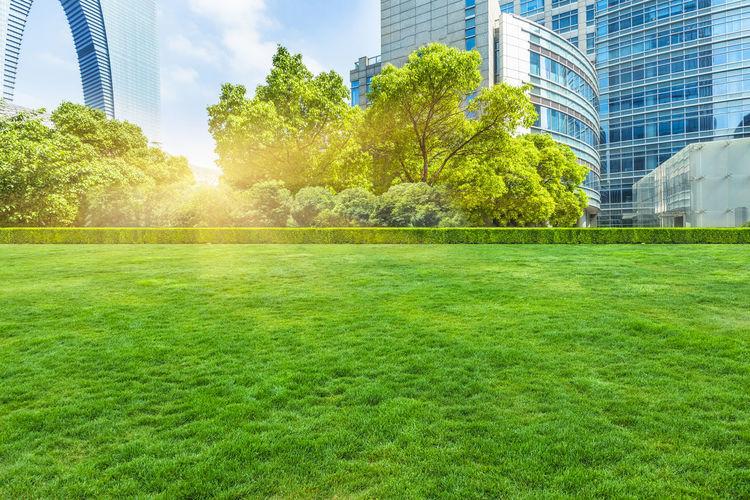 Trees growing in park against buildings in city