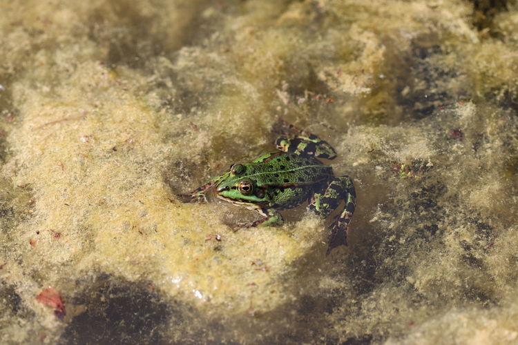 Close-up of crab in sea