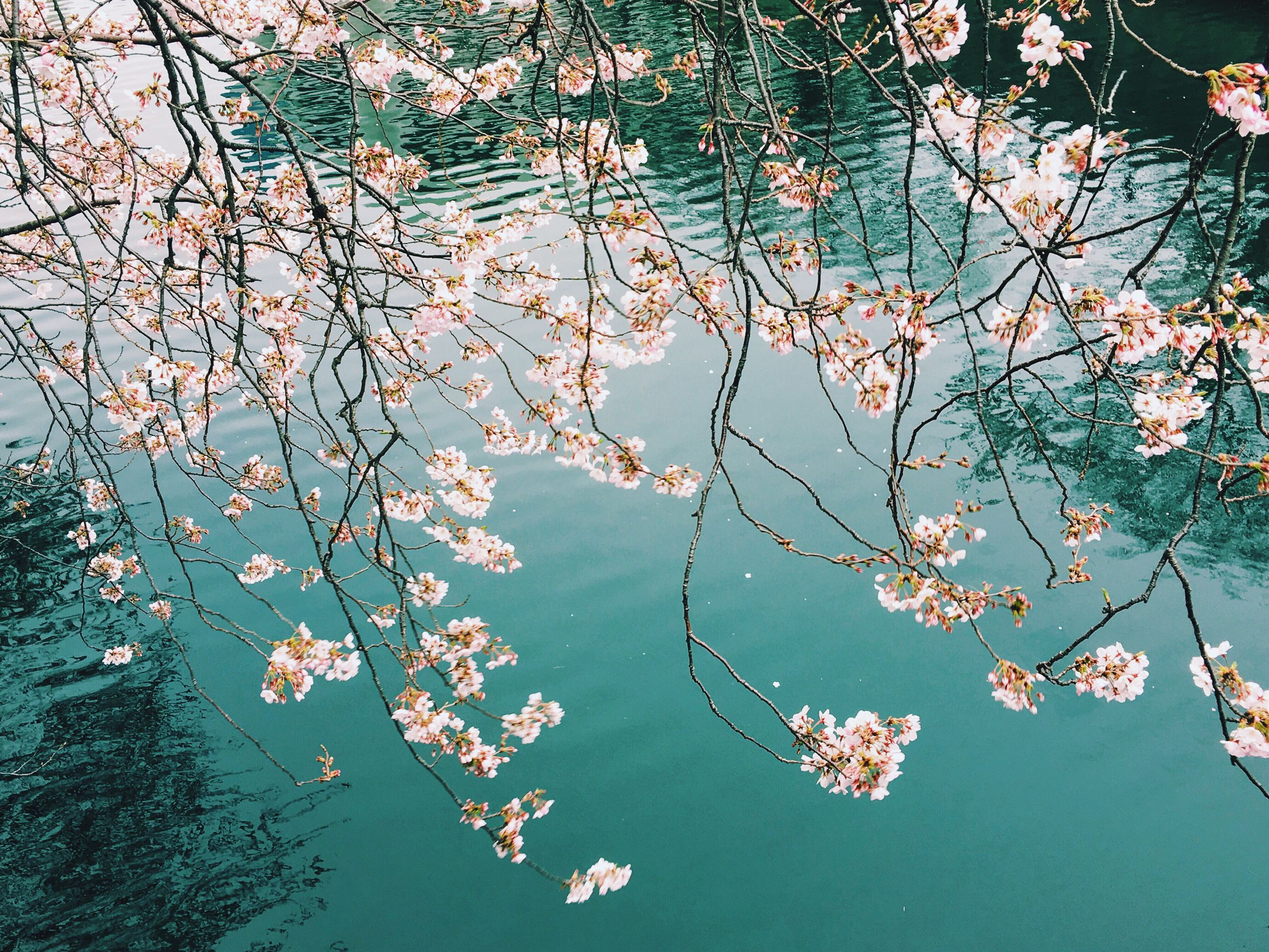 branch, tree, water, growth, leaf, nature, reflection, beauty in nature, lake, tranquility, waterfront, flower, floating on water, outdoors, day, autumn, no people, plant, twig, freshness