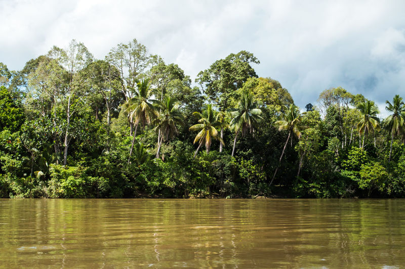 KAYAN RIVER Beauty In Nature Cloud - Sky Day Environment Forest Green Color Growth Lake Nature No People Non-urban Scene Outdoors Plant River Scenics - Nature Sky Tranquil Scene Tranquility Tree Water Waterfront