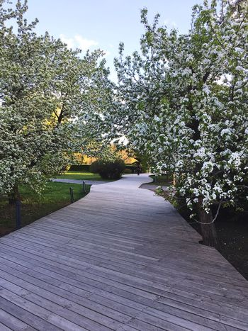 Beauty In Nature The Way Forward Nature No People Outdoors Growth Tree Tranquil Scene Tranquility Scenics Landscape Springtime Freshness Blossom Tree Blossoming  Freshness Beauty In Nature Park Muzeon Muzeonpark Spring Into Spring Spring Flowers Spring Has Arrived Spring