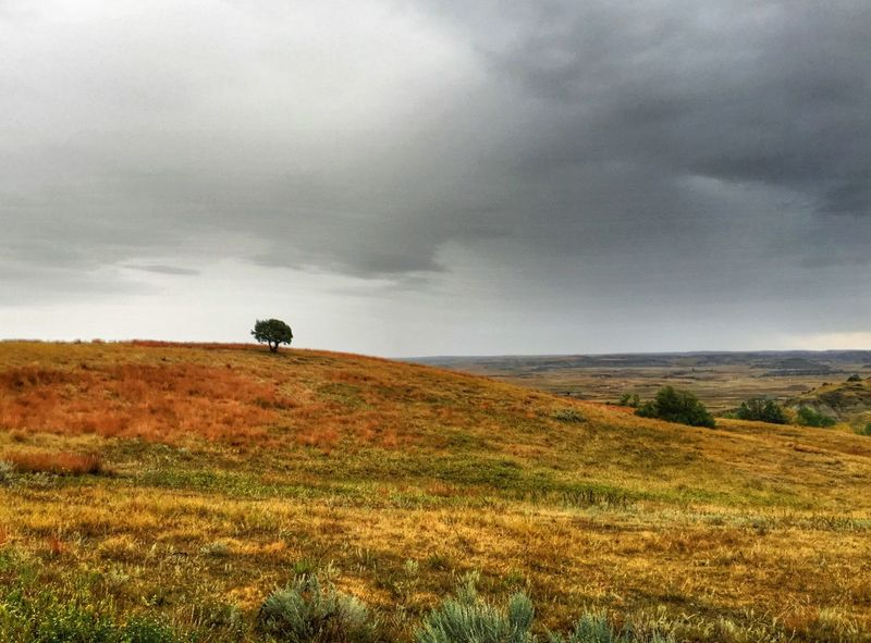 Lone tree in the storm Landscape Sky Nature Cloud - Sky Field Theodore Roosevelt National Park North Dakota Badlands North Dakota Badlands Nature Tree Beauty In Nature Weather