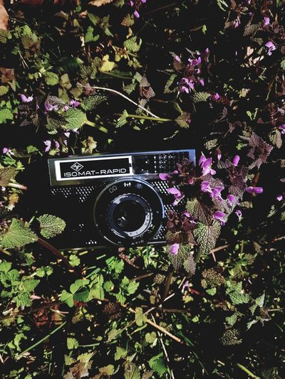Cameraporn Isomatrapid EyeEmNewHere Close-up Old-fashioned Camera - Photographic Equipment Photography Themes Technology Day Plant Freshness Flower Nature Beauty In Nature Memories ❤ Mountains And Valleys