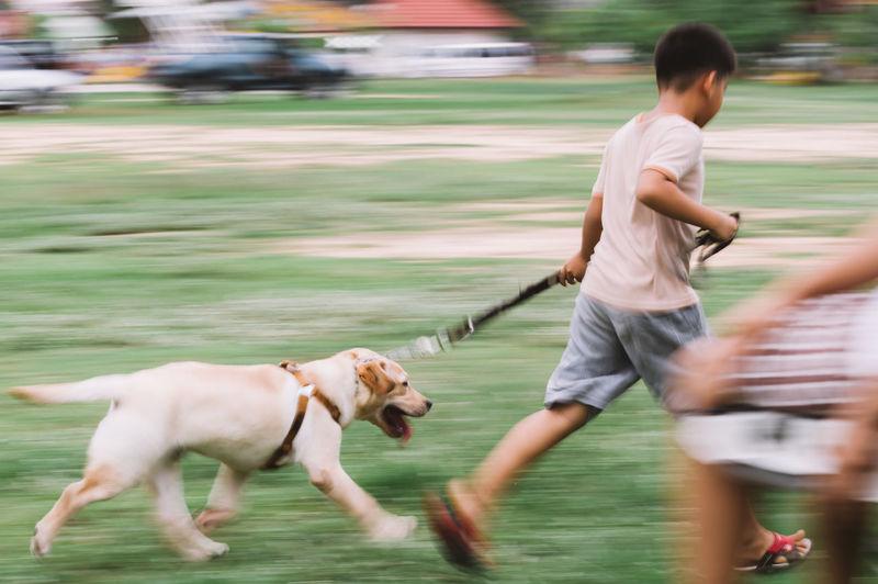 Blurred motion of boy walking with labrador retriever on field