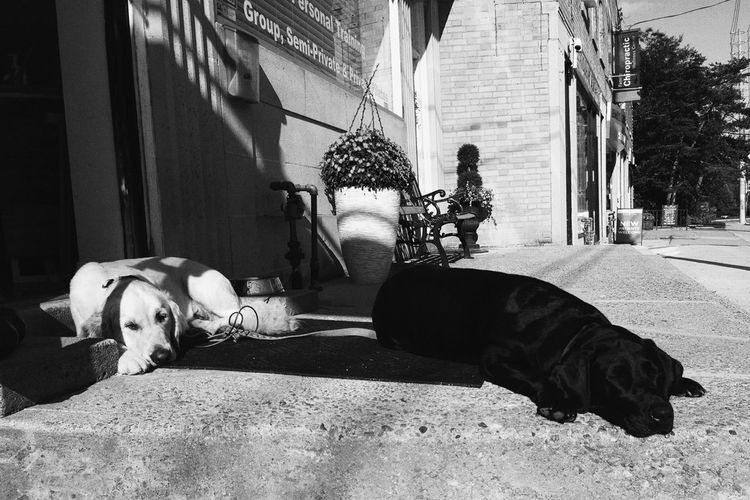 Dog days of summer IPhoneography Blackandwhite Light And Shadow Sleeping Dog