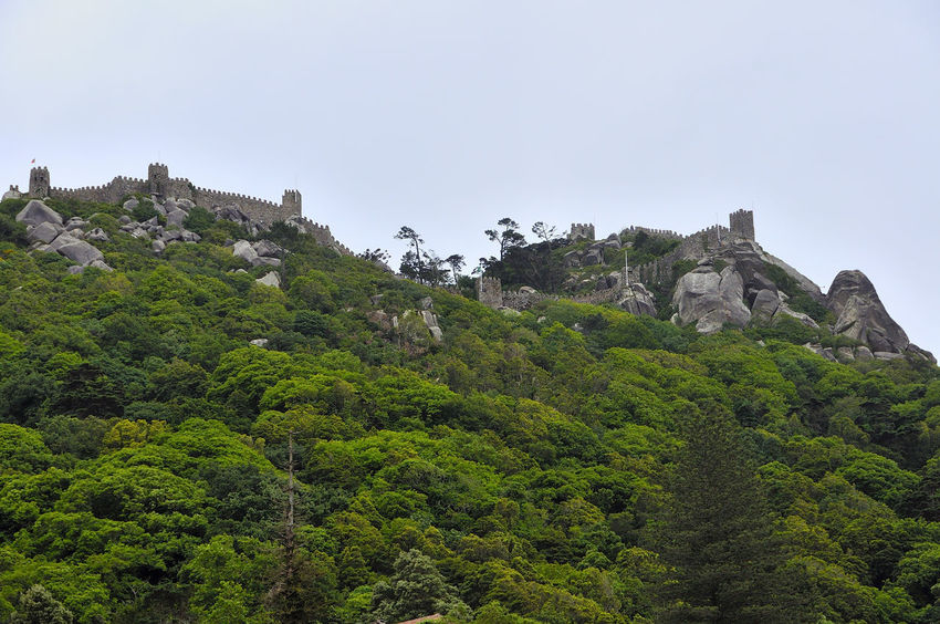Castle of the Moors in Sintra Castle Of The Moors In Sintra Architecture Castel Castle Cliff Day Mororsport Mountain Nature No People Outdoors Plant Sky Travel Destinations Tree