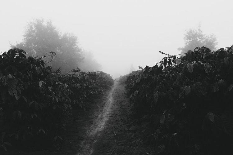 BnW Black And White Landscape Foggy Weather Nature Nature Photography Tree Trees Black And White Nature Black And White Photography Blackandwhite Blackandwhite Photography Foggy Forest Nature Black&white Sky