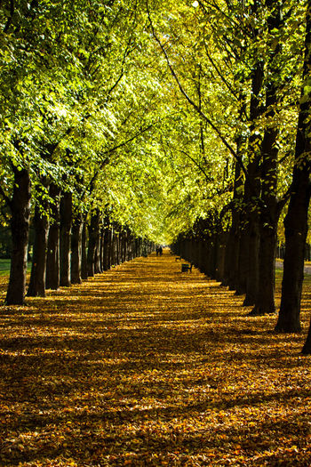 Allee at the Herrenhausen Gardens in Hannover Autumn Beauty In Nature Day Freshness Green Color Horns Landscape Leading Lines Leaf Nature No People Outdoors Scenics Tree Tree Lined Yellow