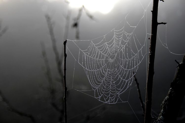 Autumn Autumn Mood Black Blackandwhite Branch Close-up Complexity Coweb Day Dew Dew Drops Dew Drops On Cowebs Dewdrop Dewdrops Focus On Foreground Fog Foggy Fragility Intricacy Morning Morning Light Spider Spider Web Tree Web