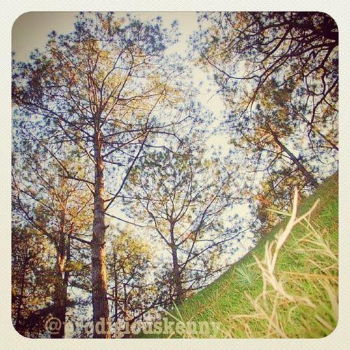 Help save trees!! ?????