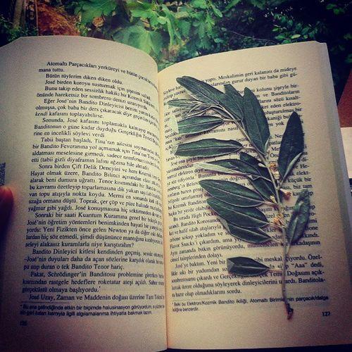 Book Text Paper