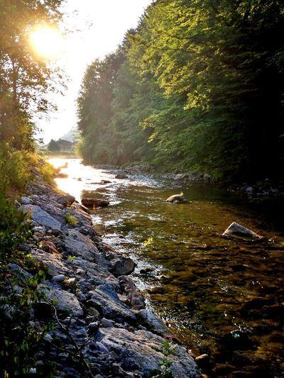 Kieferbach Water Sunlight Forest