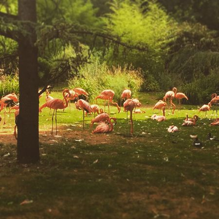 Flamant Rose Animals Zoo OpenEdit