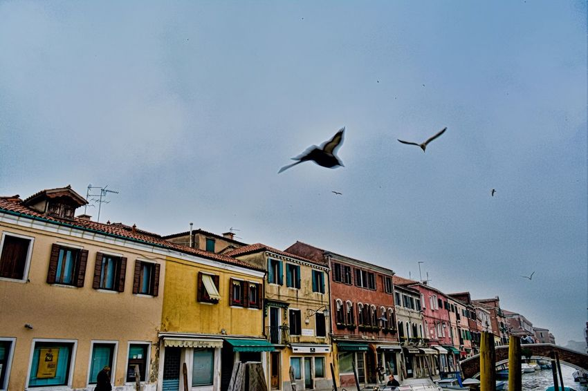 Capturing Motion Building Exterior Bird Architecture Animal Themes Flying City Sky Outdoors Italy Venice