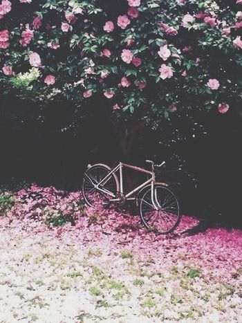Garden Flowers Nature Bicycle