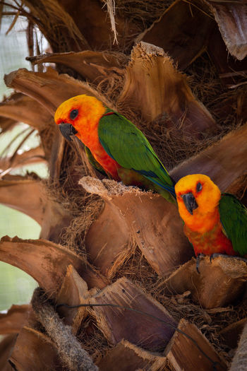 Close-up of parrot perching on nest