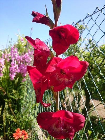Nature Rojo