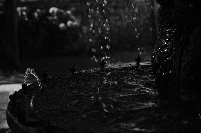 Water Splashing No People Wet Outdoors Day Spraying Nature Tree Irrigation Equipment Splashing Droplet Close-up Preto E Branco Black And White Fontain Fonte Fontaine