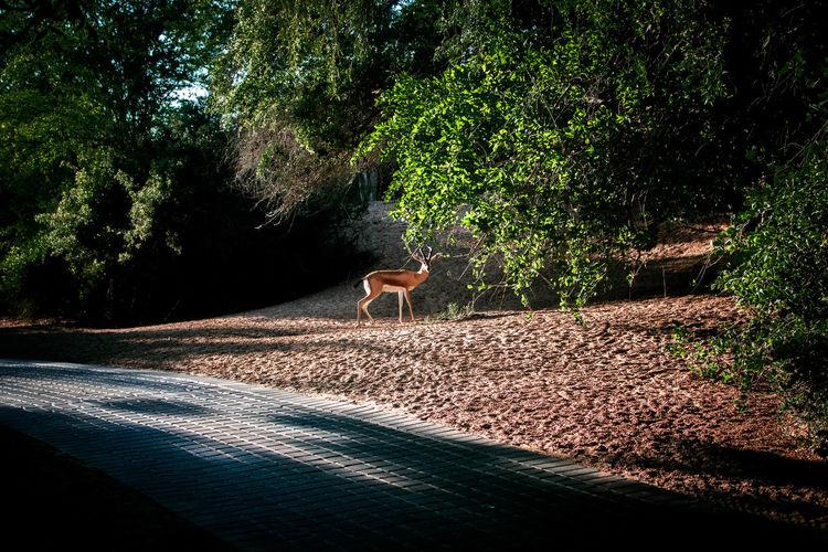 Animal Animal Themes Day Deer Green Color No People One Animal Outdoors Tree