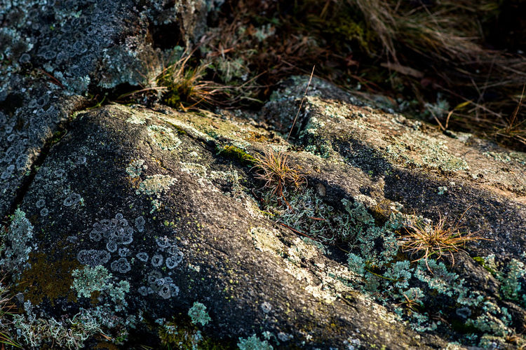 Sweden rocks 😂 High Angle View Nature Outdoors Day No People Textured  Beauty In Nature Backgrounds Close-up Nikon Tranquility Stones Winter Wintertime Eye4photography  Sunset Grass Growth Rocks Rock Moss Green Turquoise Colors Colorful