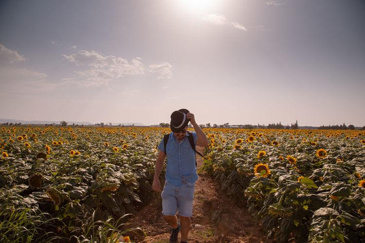 Man wearing hat walking on sunflower field