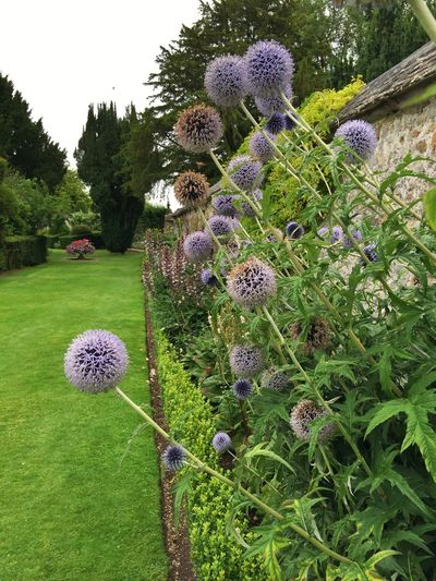 Avebury Manor, Wiltshire August Picturesque Glorious Summer Summer Flowers Great Day Out Nationaltrust Beautyinnature  Avebury Wiltshire