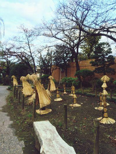 Winter Preparation 冬支度 Garden Garden Photography