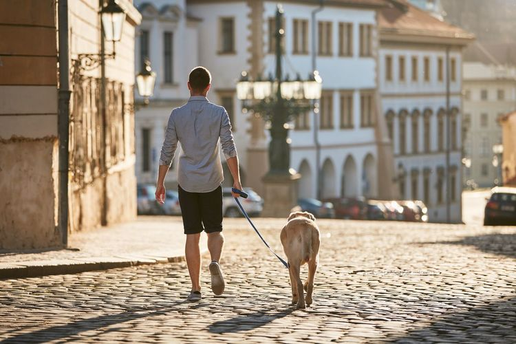 Rear view of man with dog walking in city