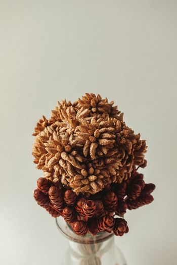 Directly above shot of dried flower against white background