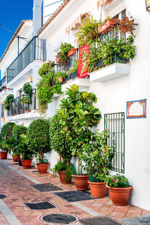 Picturesque street of Rancho Domingo. Charming white village in Benalmadena, Malaga. Andalusia, southern Spain Andalusia Balcony Benalmádena, Malaga, Spain Blooming Europe Fancy Façade Flower Pot Flowerbed Footpath Malaga Nobody Outdoors Potted Plant Rancho Domingo Residential Building Sidewalk SPAIN Sunny Day Typical Houses Vertical Village Walkway Whitewashed Yard