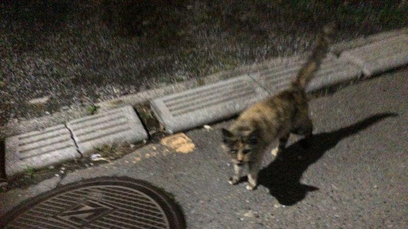 Cat 野良猫 Stray Cat 夜ねこ