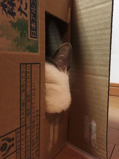 頬がはみ出してますよ。 Cat