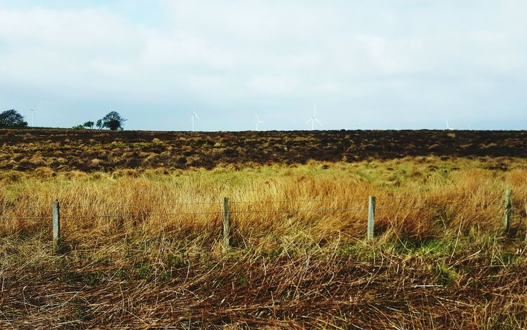 Ancient Peat Bog Rural Scene Field