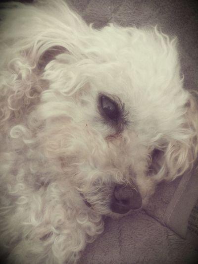Frank o Cachorinho :)